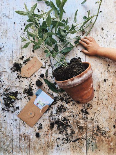articolo blog di silvia matzeu 5 consigli essenziali bellissime foto flatlay vaso di fiori