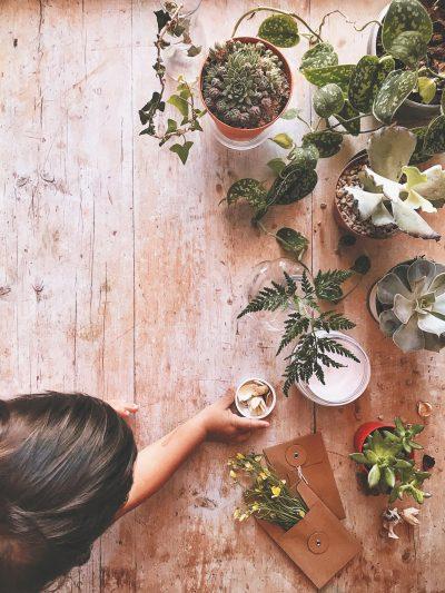 articolo blog di silvia matzeu per creare bellissime foto flatlay composizione erbe grasse