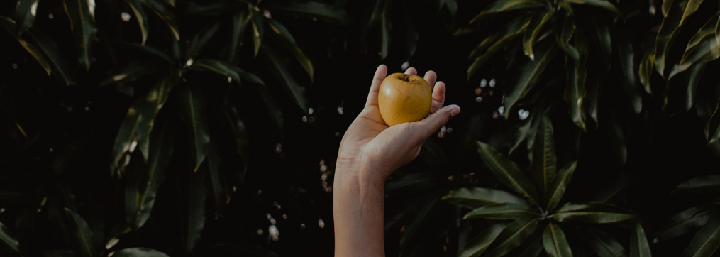 raccogli-i-tuoi-frutti-mentoring-silvia-matzeu
